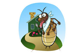 Q&A: Pest Inspections